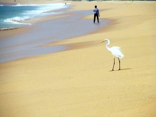 The Stork Along the Beach