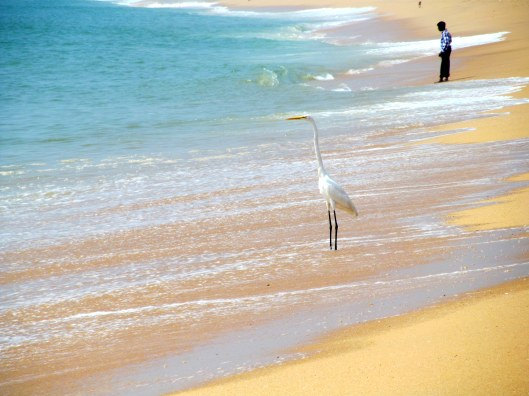 The Stork Along the Beach