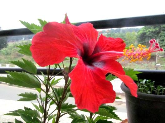 The Beautiful Blossom